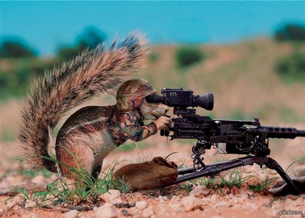 Evil squirrel with gun