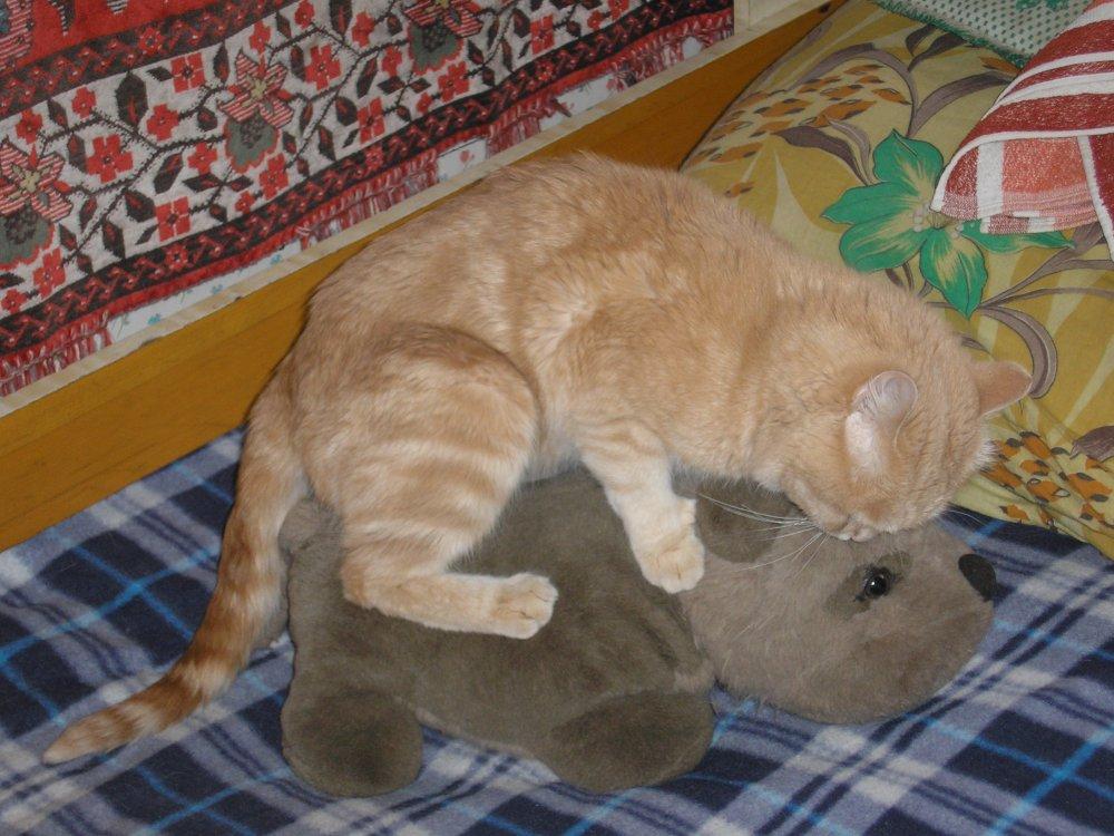Кот ебет кошку