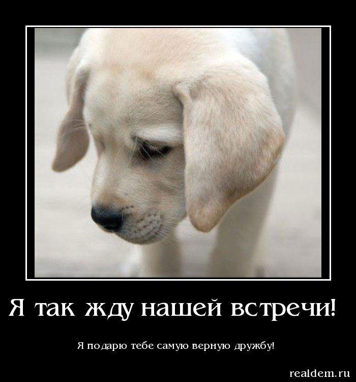 самые смешные собаки фото в мире