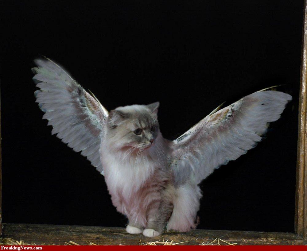 Кот которого выросли крылья