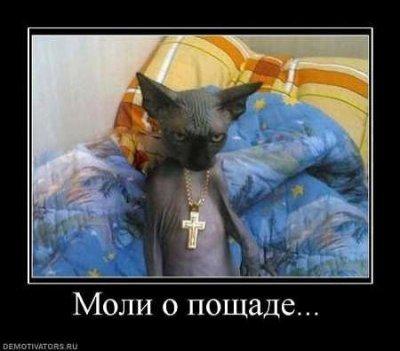 https://cs.pikabu.ru/images/big_size_comm/2011-12_4/13243168859483.jpg
