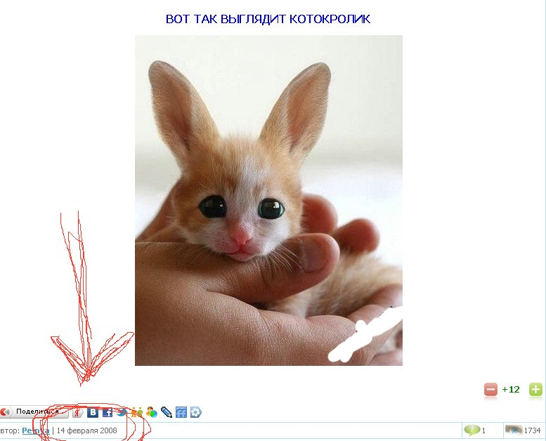 Смесь кролика и кота