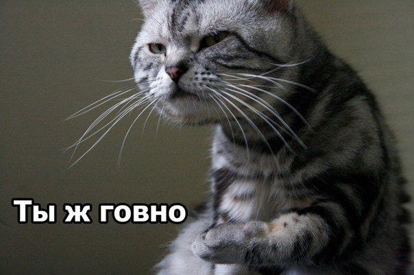 http://cs.pikabu.ru/images/big_size_comm/2012-02_6/133045077973.jpg