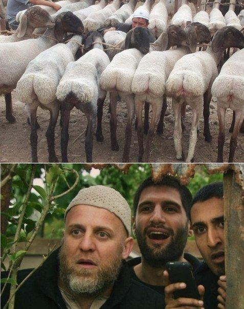 узбеки любят в жопу