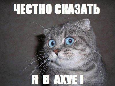 Пиздец коте