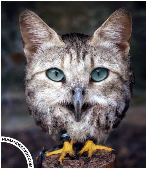 Картинка совы с котом