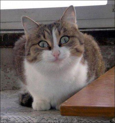 Хитрый кот картинки