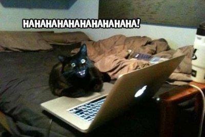 Человек с котом секс
