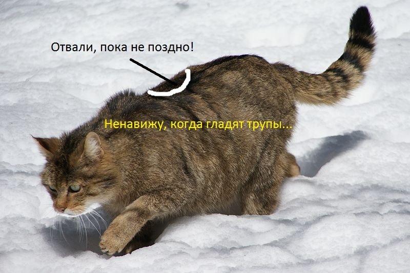 Где здесь кот я хочу потрогать