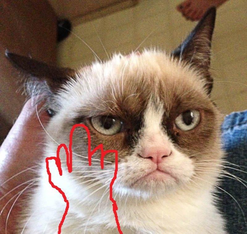 Кот показал средний палец