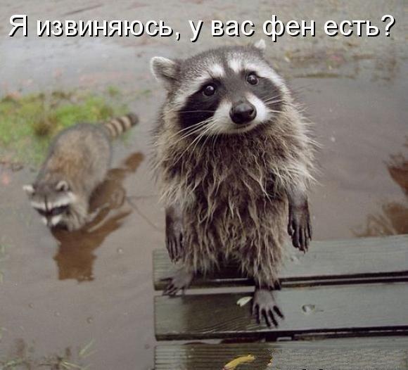 https://cs.pikabu.ru/images/big_size_comm/2013-04_3/13660398135171.jpeg