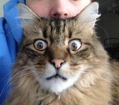 От кота стало вонять