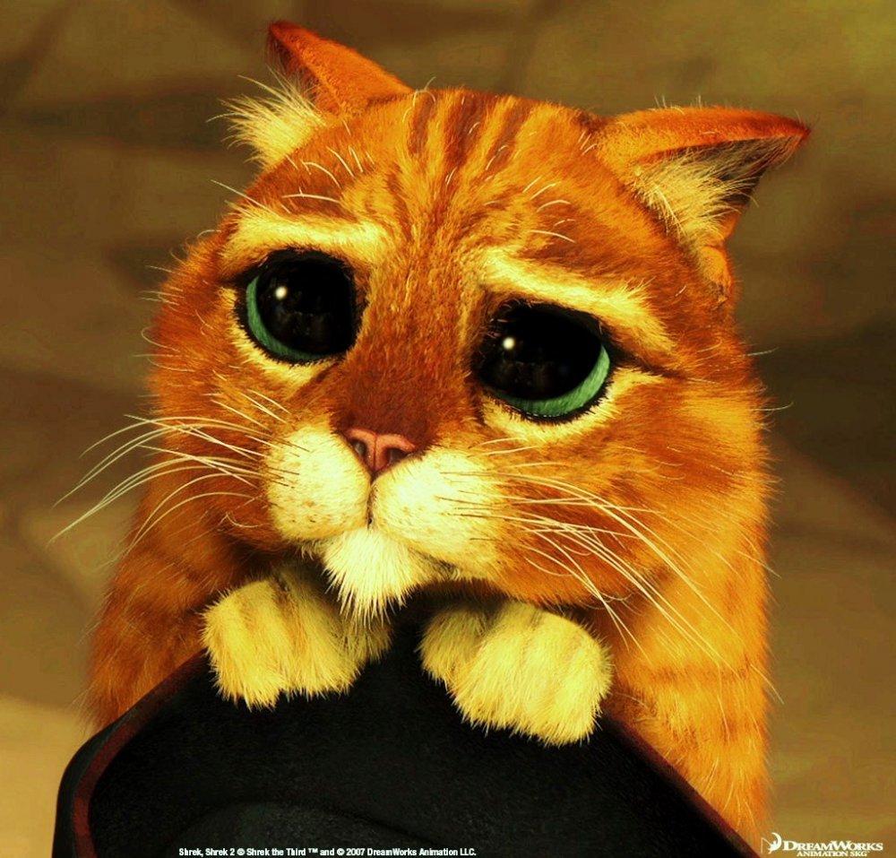Картинка просящего кота