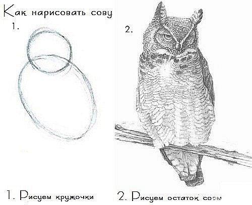 Как рисуется вагина фото 696-568