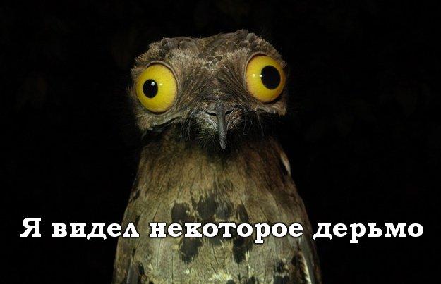 https://cs.pikabu.ru/images/big_size_comm/2013-09_3/13788932669076.jpg