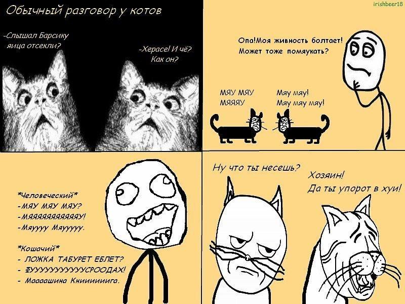 Мультик для котов на кошачьем языке