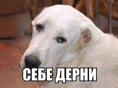 Почему анус пса