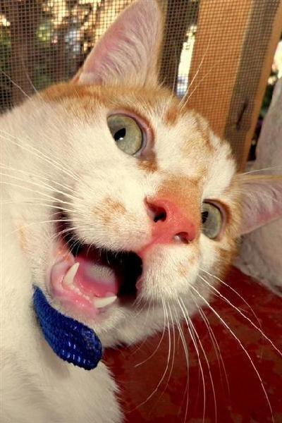 Кот сам себя сфоткал