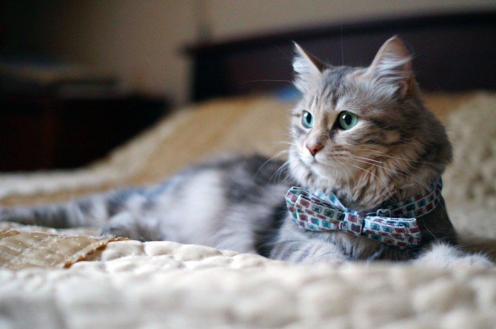 Картинки по запросу кошка с бантиком