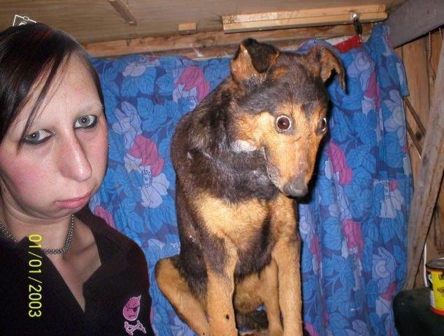 собаку укусила оса фото
