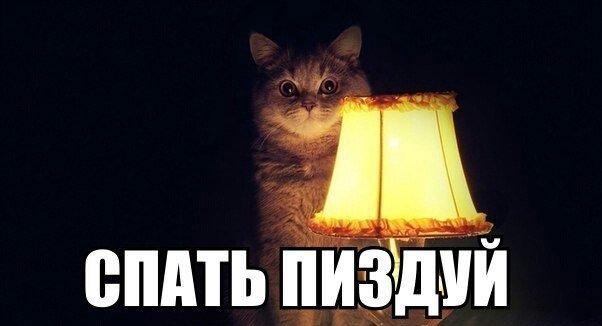Иди спать коты