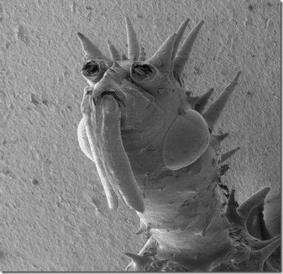 Мужско член под микроскопом