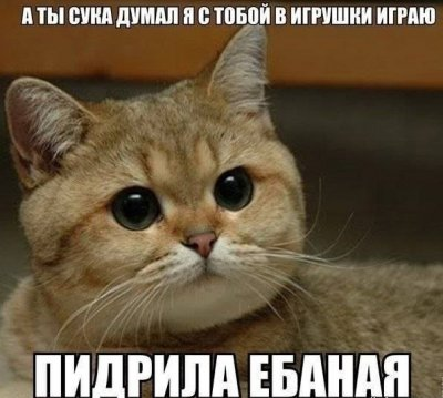Кот сам в аухе