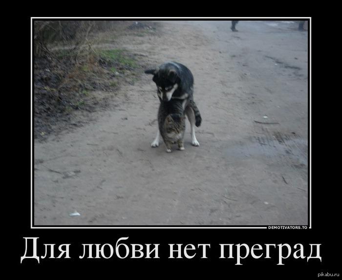 фото любовь зла