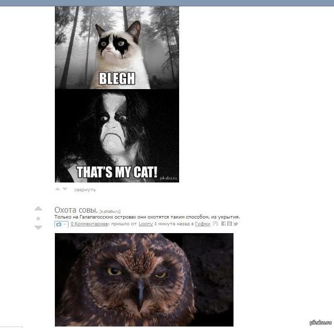 Хорошо так попалось. This is my owl!