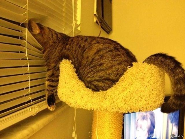 cheap cat furniture uk