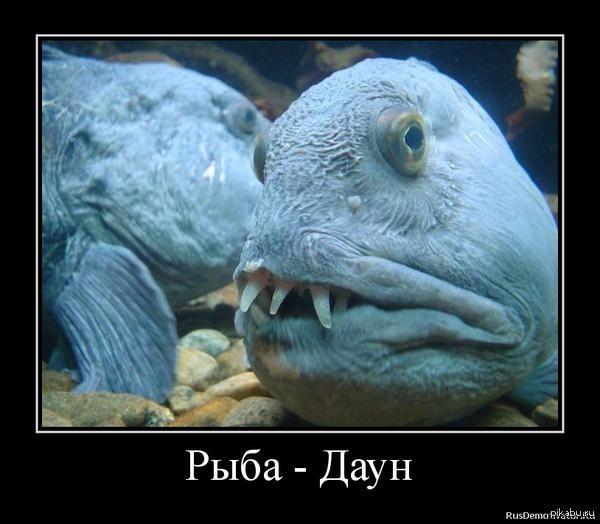 черте рыба с дурацким названием фото студень долго