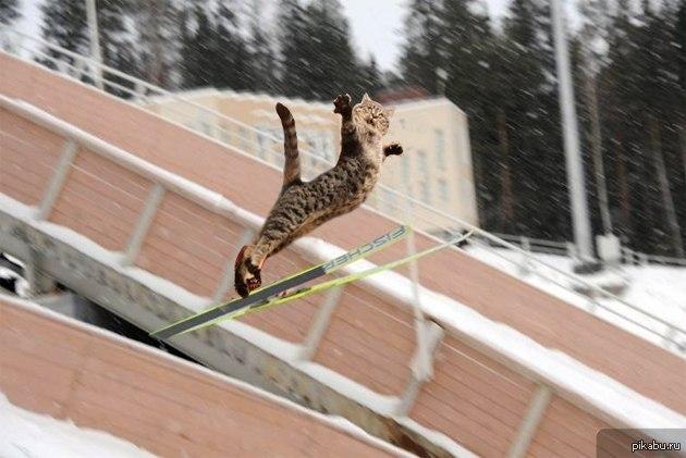 картинки котята на лыжах появления мальчика свет