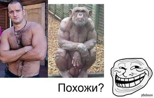 Порно с обезьянами член