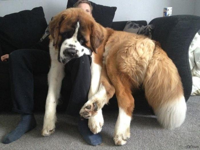фото бетховен собаки