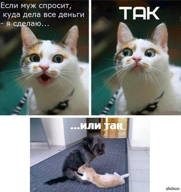 ответить фото кошки куда деньги дела каждой девушке