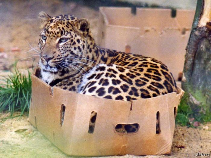 cat litter box online pakistan jobs