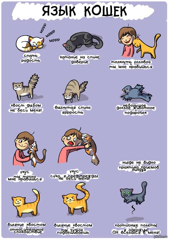 Как понимать языки котов