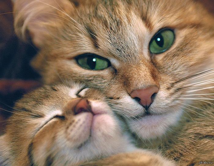 how do you get cat urine smell out of carpet
