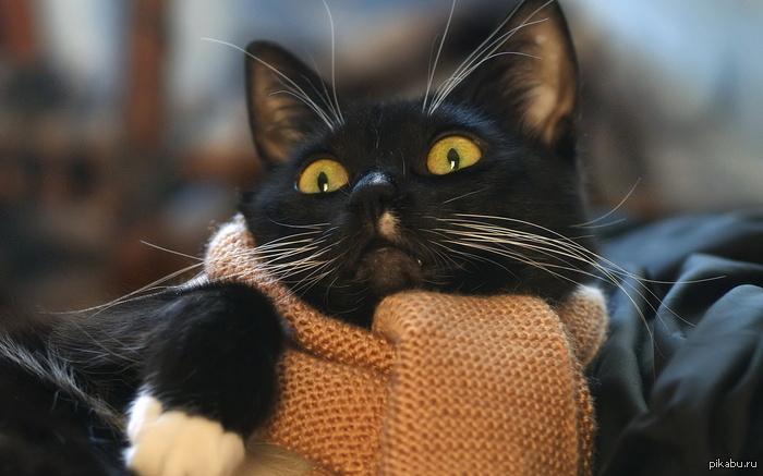 Как - зима уходит?! Я только шарф довязал!