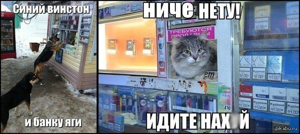 Продавец кот