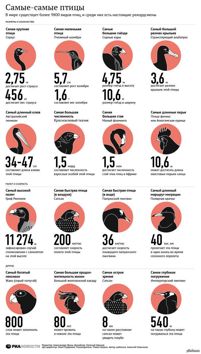 Самые-самые птицы: все о пернатых рекордсменах