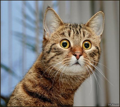 Почему кот резко похудел