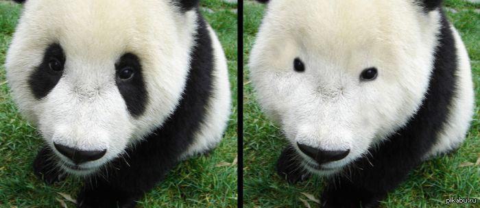 Секс панда с девушкой