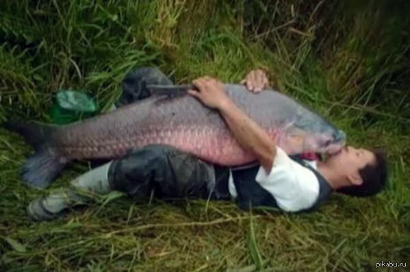 Мужик выебал рыбу в рот