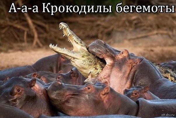 https://cs.pikabu.ru/post_img/2013/04/15/8/1366024395_1817524423.jpg