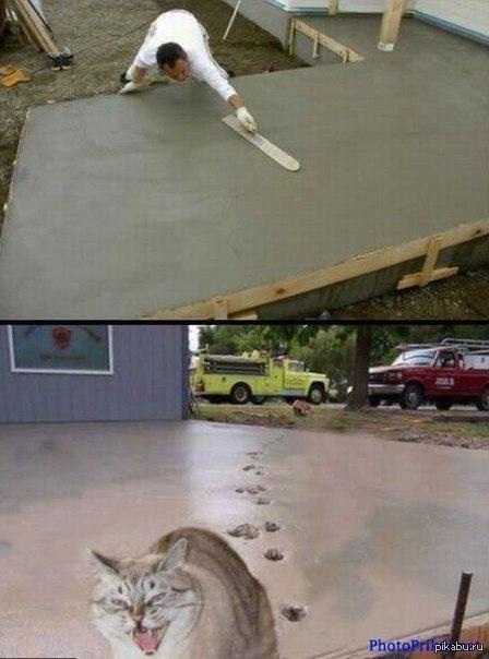 Кот и бетон бетон в староминской