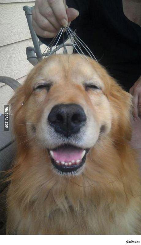 Собака на массажере массажер медисана 888
