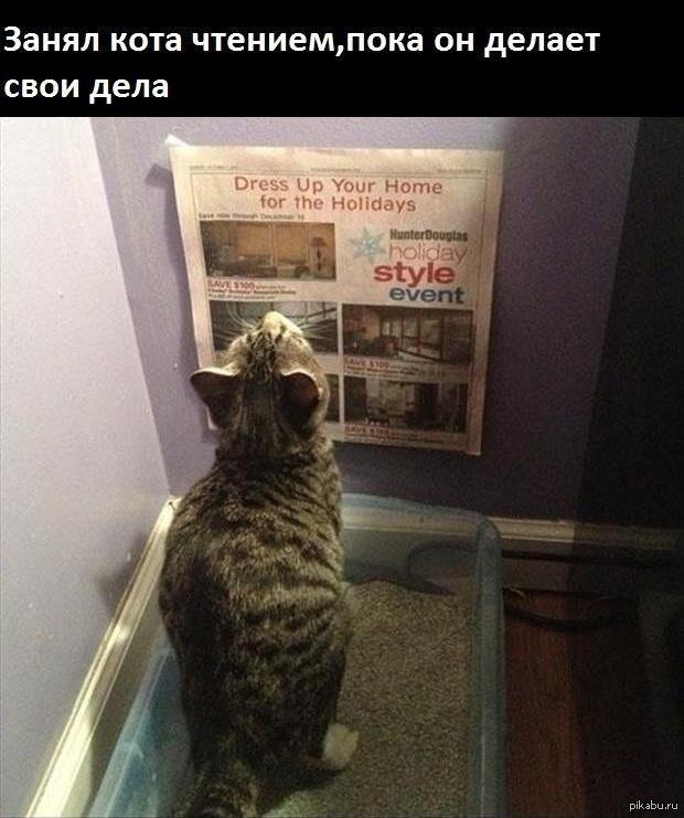 занял кота