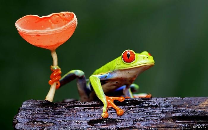 Лучшие фотографии животных по версии Daily Telegraph Лучшие фотографии животных по версии Daily Telegraph
