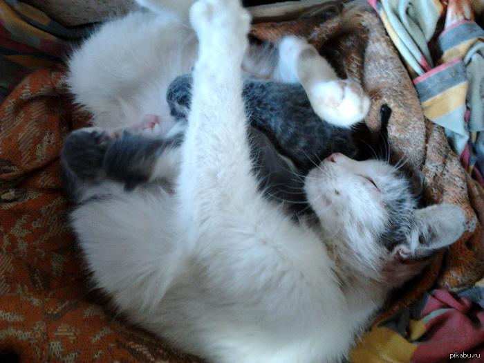 Ура котятки!!! сегодня кошка родила трёх котят)    ещё фото в коментах